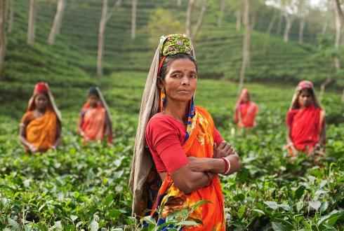 Women in field plantage in India